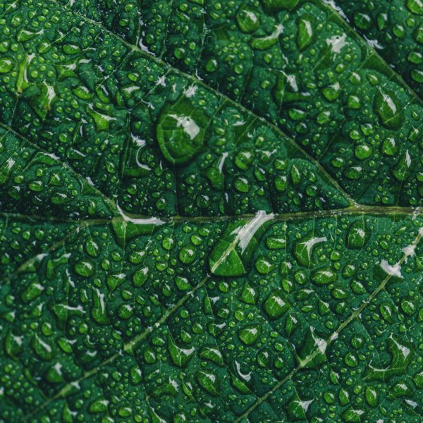close-up-photography-of-green-leaf-with-drops-of-water-544980