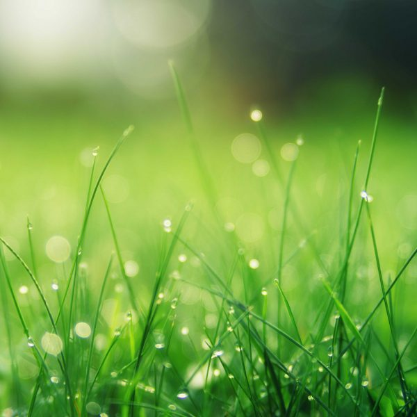 closeup-photo-of-green-grass-field-1423601